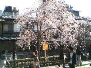 Kyoto95320
