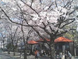 Kyoto99320