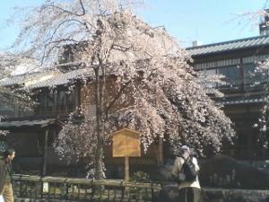 Gion10300